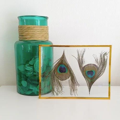 Marco transparente con plumas de pavo real